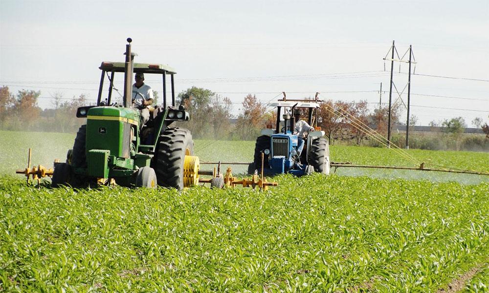 El sector agrícola en Murcia se consolida como uno de los mayores demandantes de empleo cualificado