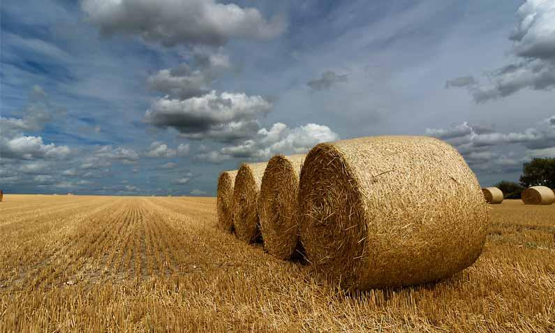 Método Lean en el sector agro-alimentario