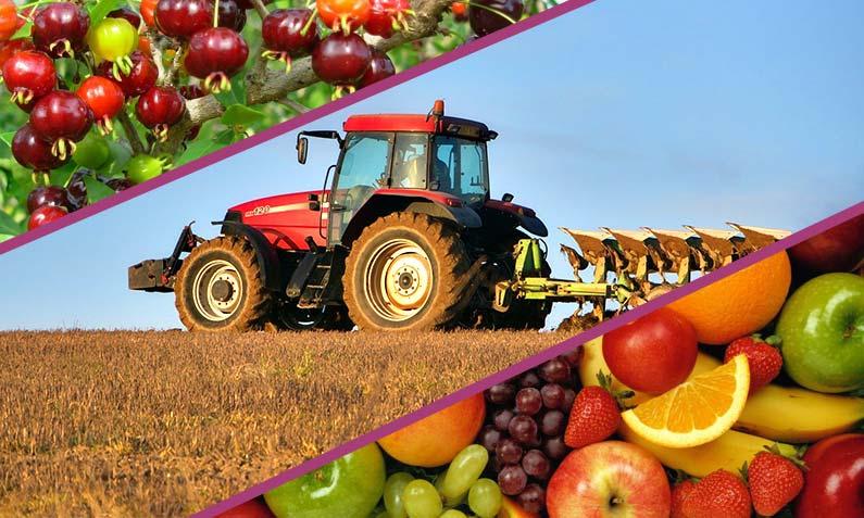 La cadena agroalimentaria